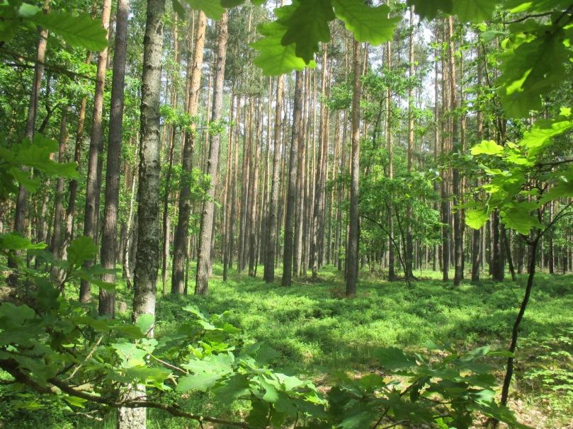 brandenburg-natur