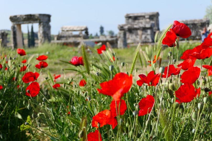 hierapolis-mohnblumen