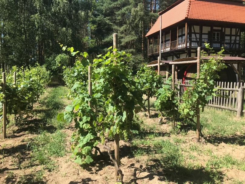 c-weinstadt-gruenberg